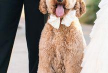 Casamento | pets e outros animais / by Tânia Simões