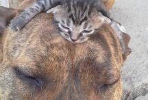 Animals cute/pets