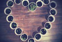 Herbs ☀