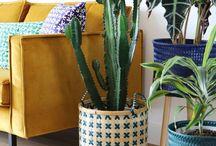 Pot plante in huis
