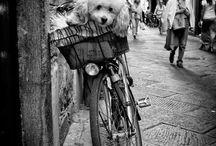 Animals love bikes too