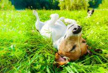 Efectos del sol en mascotas