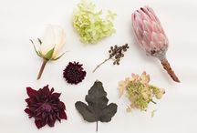 {wedding} flower guide / by B.LOVED