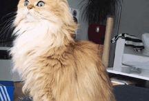 KEDI CAT