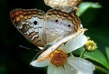 Butterflies / by Angela Faith