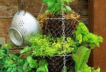 Kitchen Garden Ideas / Tips for growing herbs, vegetables and fruit for your kitchen.