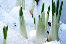 Winter at Krijnen wealth of flowers