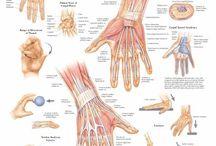 Handfunctie anatomie