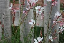 My perennial garden!