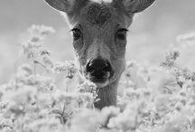 Animals lover❤️