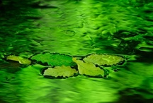 Easy Being Green / The color of nature's finest.  / by Judi Garber