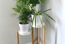 HOME | Plants / Adding plants to your home