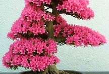Bonsai mother nature / It's cool