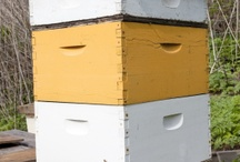 Buzz Buzz Buzz / by Cindy Wynn Canchola