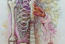 Inside the body