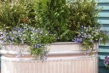 garden ideas / I love to watch my small lil garden change with the seasons