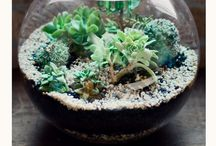Indoor/Outdoor Gardens / Neat plant and garden ideas and tips / by Amy Lynn