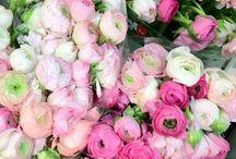 Flowers / by Joy Sanchez
