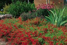 Award-Winning / The plants in this section have exceptional merit. Characteristics I feel are important include vigor, cold hardiness, long bloom time and adaptability to the rigorous climates of the Western US. You'll also find all my favorites