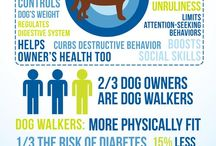 Sidewalk Safety / Dog Walking safety tips, products and facts about dog walking