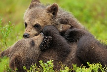 WWF Tierwelt