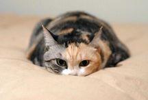 Koty i inne