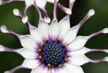 my favorite flowers