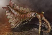 Precambrian / Evolution