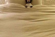 Zábavné psy