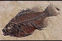 modelagem de fossil