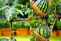 pecinta tanaman