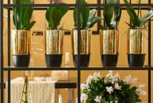 &CHRISTMAS / Get festive with plants with our inspiring ideas for holiday arrangements!