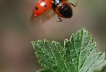 böcek & insect