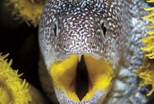 Amazing Ocean Creatures