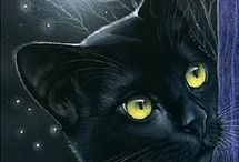 KARA KEDİ / BLACK CAT