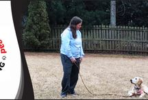 Services by Taking the Lead K9 Training / Welcome to Taking the Lead K9 Training, the leading dog and puppy training company serving pet owners in and around Alpharetta, GA. It's our mission to expand the awareness of proper dog training using the most modern and up-to-date training techniques with science-based learning principles to help enhance the communication between humans and canines, helping them live harmoniously.