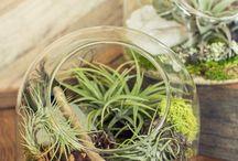 plantenarrangementen