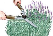 Pflanzen und Pflanzenpflege