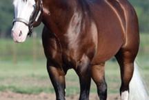Cool Reining Horses