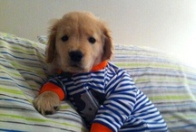Adorable Dogs!!! / Absolutely adorable animal pictures to put a smile on your face.