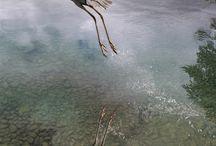 Cranes/Herons