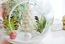 Terrarium Tillandsia Christmas