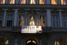 Oxalis dessous fashion show 2015 / Naše společnost uspořádala v krásných prostorách Kaiserštejnského paláce na Malostranském náměstí v Praze přehlídku francouzského spodního prádla značek Passionata, Chantelle, Barbara, Aubade a Lise Charmel. Podívejte se na fotky z této akce.