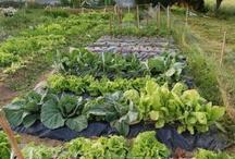 Huertos y jardineria