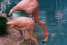 flamingos ♡