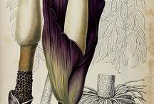 À rebours . VIII . Botany