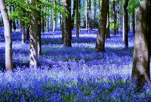 Northamptonshire Scenes