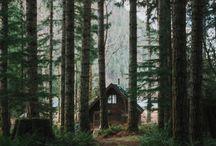 Hytte skog