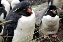 Penguins of Antarctica / Seven species of penguins photographed by David Stanley on a visit to the Falkland Islands, South Georgia, and Antarctica.