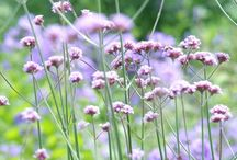 Bloemen / Bloemen brengen sfeer, kleur en gezelligheid in huis! Wij hebben daarom de leukste inspiratiebeelden voor jou verzameld!